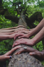Many pairs of hands on the truck on a tree growing towards the sky