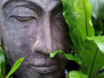 Peaceful Buddha amid green leaves